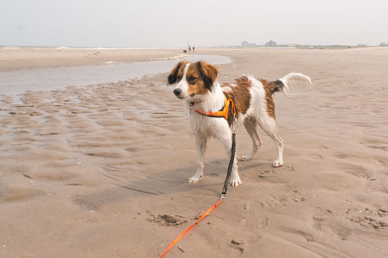 Erster Strandbesuch mit Luuk